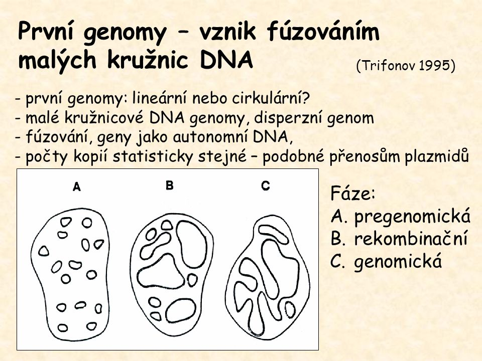 První genomy – vznik fúzováním malých kružnic DNA Důkazy: - periodicita délek proteinů (123AK u prokaryot, 152 AK u eukaryot) - nejsnazší cirkularizace 350-450bp - periodicita výskytu Met - pozůstatkem extrachromosomální DNA – 10% genomu - mobilní elementy, lyzogenní fágy, genomy organel, horizontální přenos - replikace genů a satelitů prostřednictvím eccDNA (Trifonov 1995)
