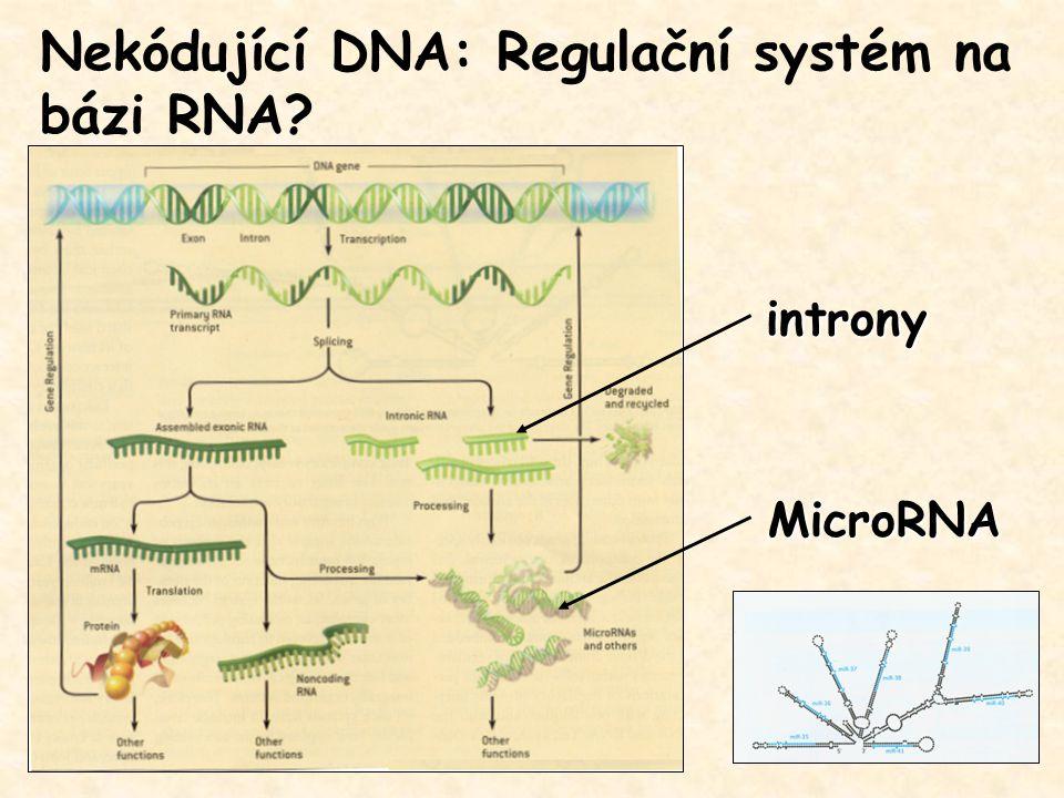 MicroRNA Nekódující DNA: Regulační systém na bázi RNA? introny