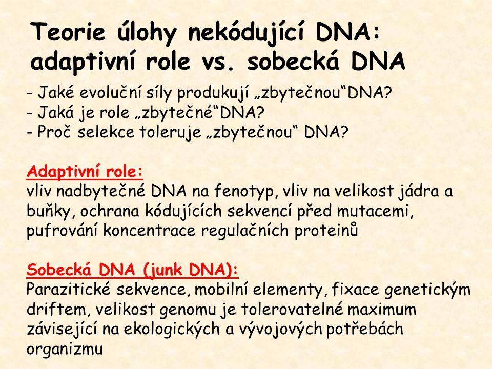 """Teorie úlohy nekódující DNA: adaptivní role vs. sobecká DNA - Jaké evoluční síly produkují """"zbytečnou""""DNA? - Jaká je role """"zbytečné""""DNA? - Proč selekc"""