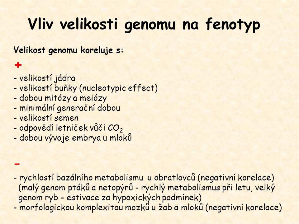 Vliv velikosti genomu na fenotyp Velikost genomu koreluje s: + - velikostí jádra - velikostí buňky (nucleotypic effect) - dobou mitózy a meiózy - mini