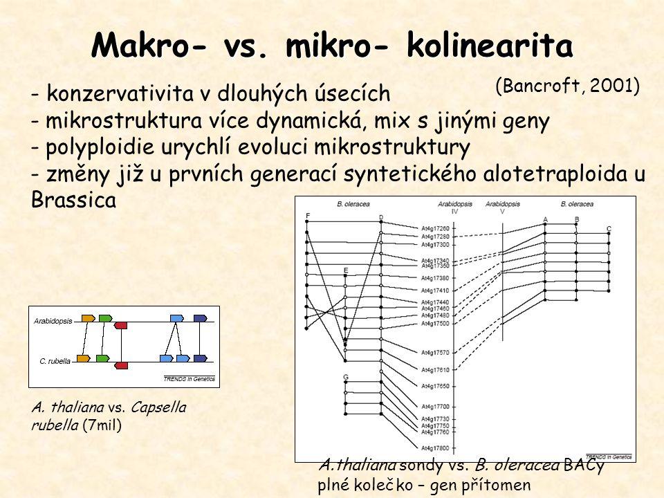 Makro- vs. mikro- kolinearita - konzervativita v dlouhých úsecích - mikrostruktura více dynamická, mix s jinými geny - polyploidie urychlí evoluci mik