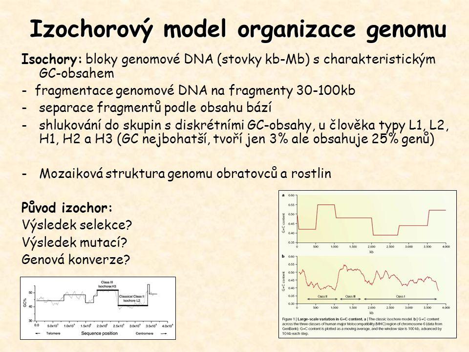 Isochory: bloky genomové DNA (stovky kb-Mb) s charakteristickým GC-obsahem - fragmentace genomové DNA na fragmenty 30-100kb -separace fragmentů podle