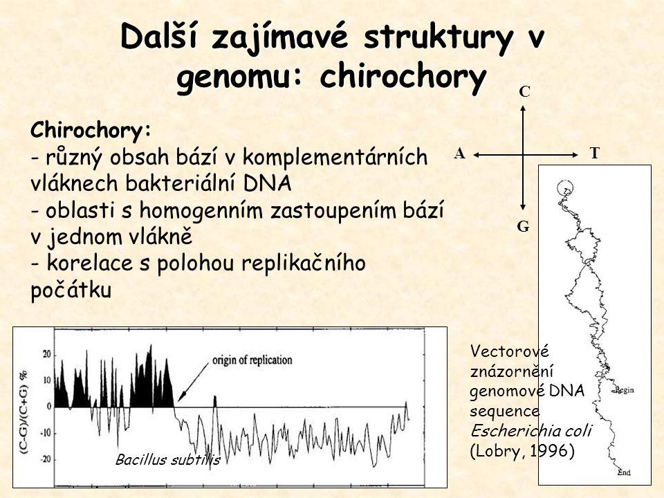Další zajímavé struktury v genomu: chirochory Bacillus subtilis A C G T Chirochory: - různý obsah bází v komplementárních vláknech bakteriální DNA - o