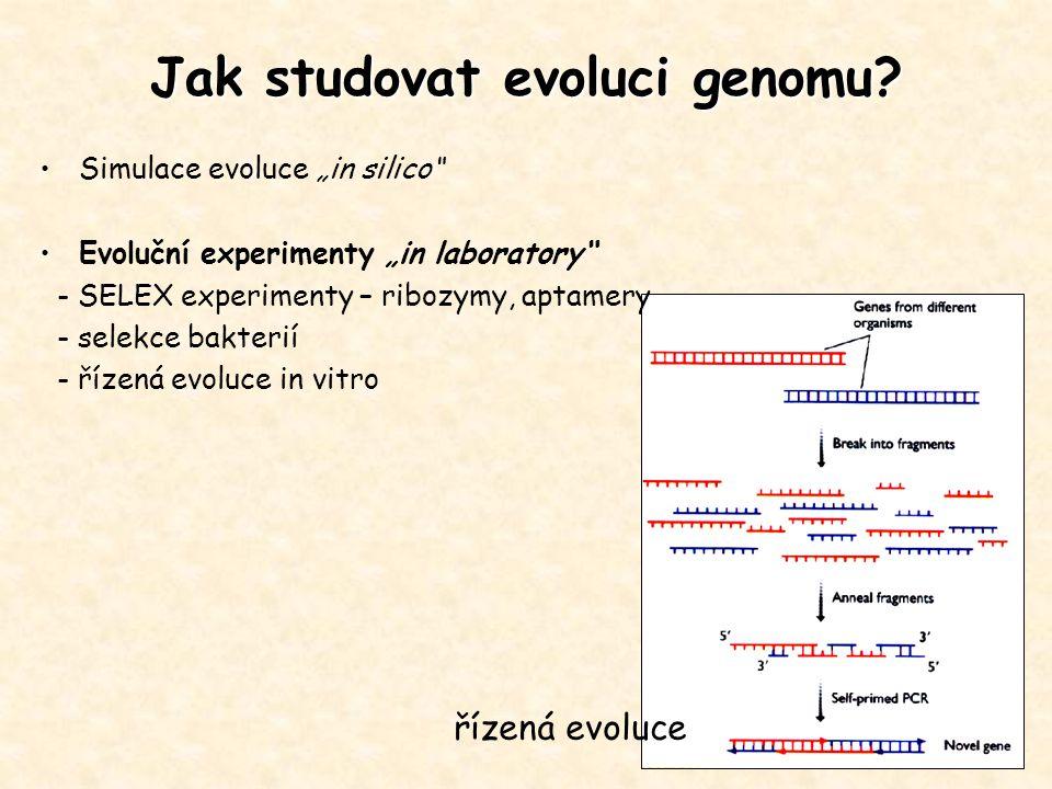 """Jak studovat evoluci genomu? Simulace evoluce """"in silico"""" Evoluční experimenty """"in laboratory"""" - SELEX experimenty – ribozymy, aptamery - selekce bakt"""