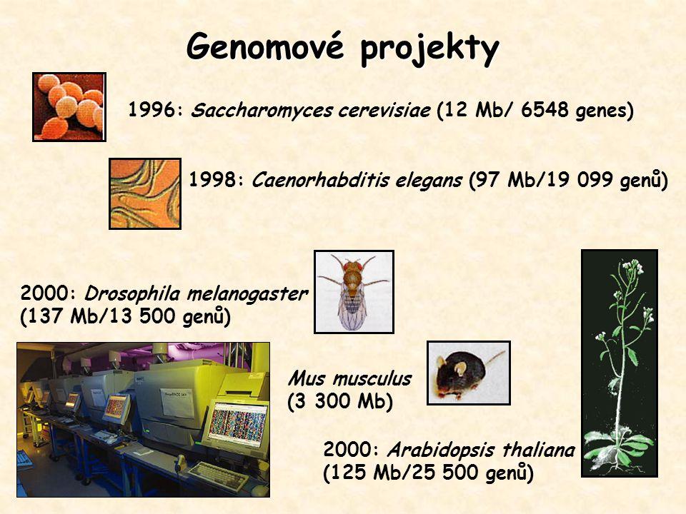 Genomové projekty 2000: Drosophila melanogaster (137 Mb/13 500 genů) 1996: Saccharomyces cerevisiae (12 Mb/ 6548 genes) 1998: Caenorhabditis elegans (