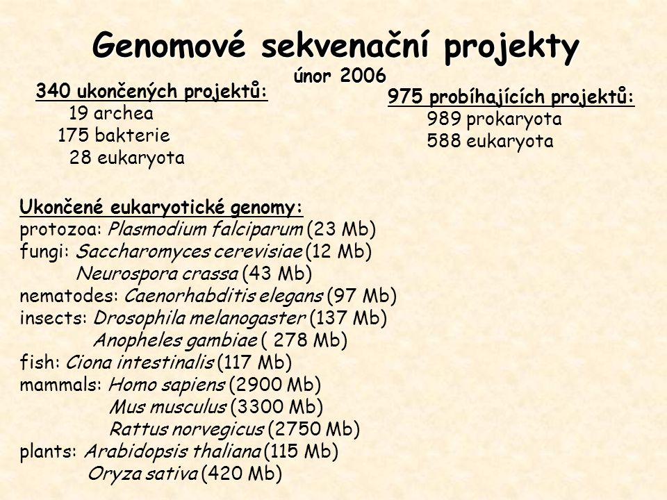 Genomové sekvenační projekty únor 2006 340 ukončených projektů: 19 archea 175 bakterie 28 eukaryota Ukončené eukaryotické genomy: protozoa: Plasmodium