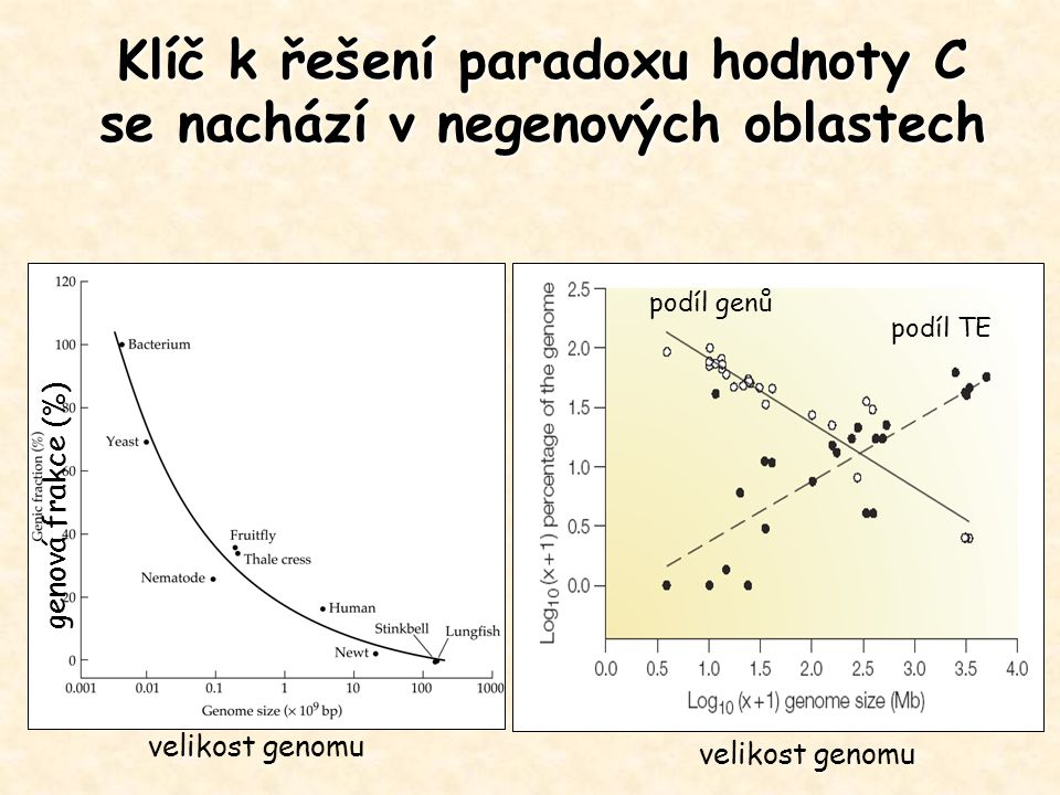 Hlavní komponenty eukaryotického genomu Kódující části genů: - u prokaryot tvoří většinu genomu - u eukaryot méně, člověk 24 000 genů – 1.5% Introny: - původně považovány za příčinu C-paradoxu, - tvoří většinu genů Pseudogeny: - klasické, retropseudogeny, - 19000 člověk, 14000 myš, 51 kur, 33 kvasinka, 176 drosophila Mobilní elementy: - LTR, nonLTR – SINE, LINE, DNA transposony- MITE Numt, Nupt: - inzerce promiskuitní DNA