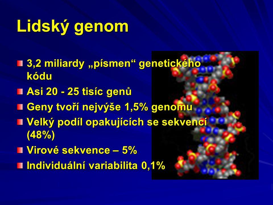 """Lidský genom 3,2 miliardy """"písmen"""" genetického kódu Asi 20 - 25 tisíc genů Geny tvoří nejvýše 1,5% genomu Velký podíl opakujících se sekvencí (48%) Vi"""