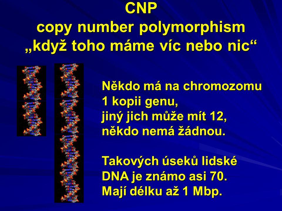 """CNP copy number polymorphism """"když toho máme víc nebo nic"""" Někdo má na chromozomu 1 kopii genu, jiný jich může mít 12, někdo nemá žádnou. Takových úse"""