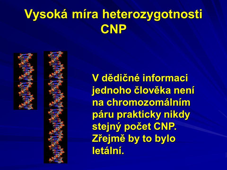 Vysoká míra heterozygotnosti CNP V dědičné informaci jednoho člověka není na chromozomálním páru prakticky nikdy stejný počet CNP. Zřejmě by to bylo l