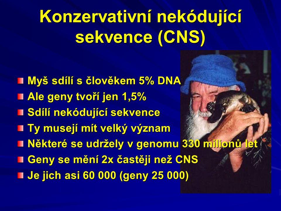 Konzervativní nekódující sekvence (CNS) Myš sdílí s člověkem 5% DNA Ale geny tvoří jen 1,5% Sdílí nekódující sekvence Ty musejí mít velký význam Někte