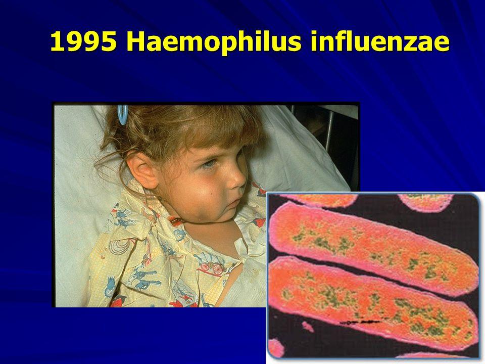 1995 Haemophilus influenzae