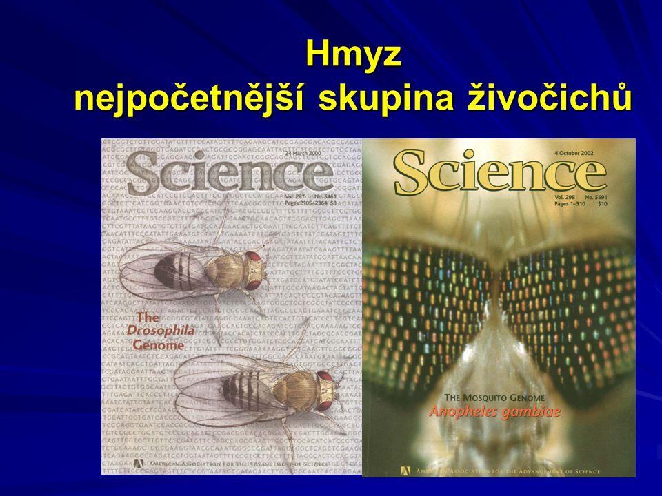 Hmyz nejpočetnější skupina živočichů