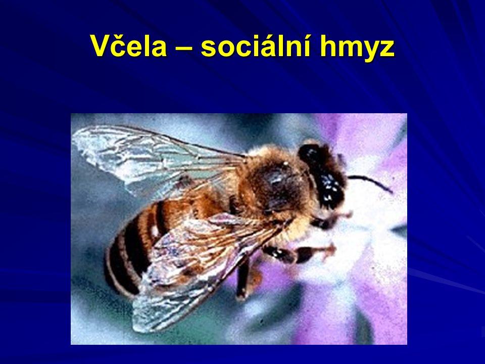 Včela – sociální hmyz