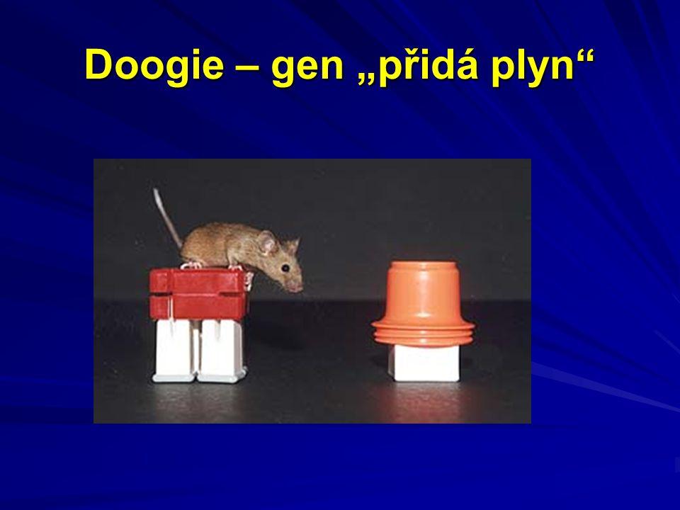 """Doogie – gen """"přidá plyn"""""""