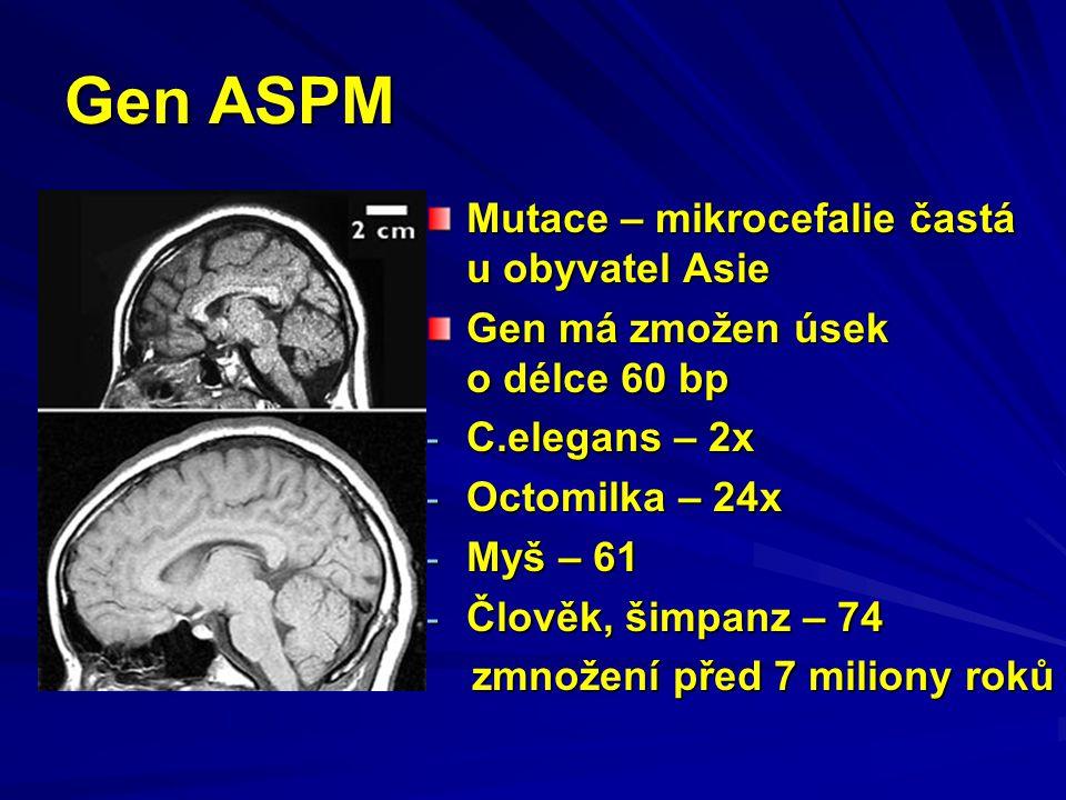 Gen ASPM Mutace – mikrocefalie častá u obyvatel Asie Gen má zmožen úsek o délce 60 bp - C.elegans – 2x - Octomilka – 24x - Myš – 61 - Člověk, šimpanz