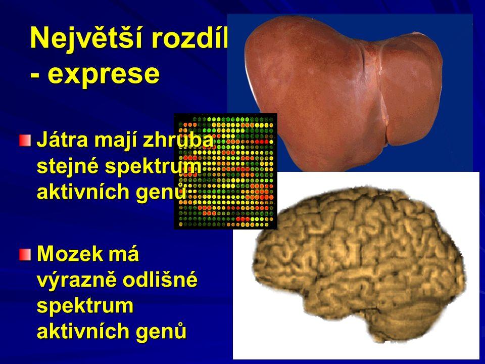 Největší rozdíl - exprese Játra mají zhruba stejné spektrum aktivních genů Mozek má výrazně odlišné spektrum aktivních genů