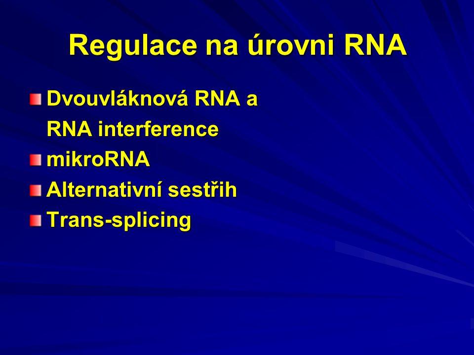 Regulace na úrovni RNA Dvouvláknová RNA a RNA interference mikroRNA Alternativní sestřih Trans-splicing