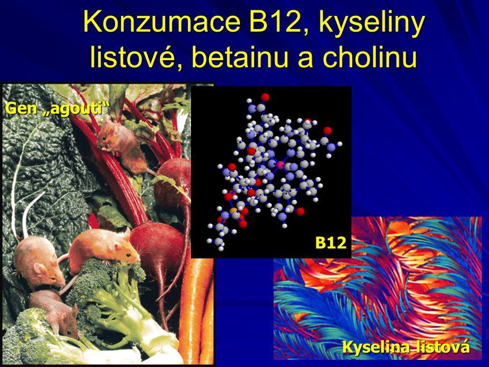 """Konzumace B12, kyseliny listové, betainu a cholinu B12 Kyselina listová Gen """"agouti"""""""