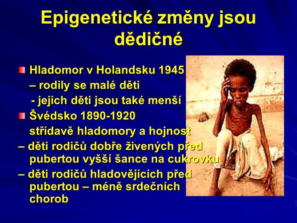 Epigenetické změny jsou dědičné Hladomor v Holandsku 1945 – rodily se malé děti - jejich děti jsou také menší - jejich děti jsou také menší Švédsko 18