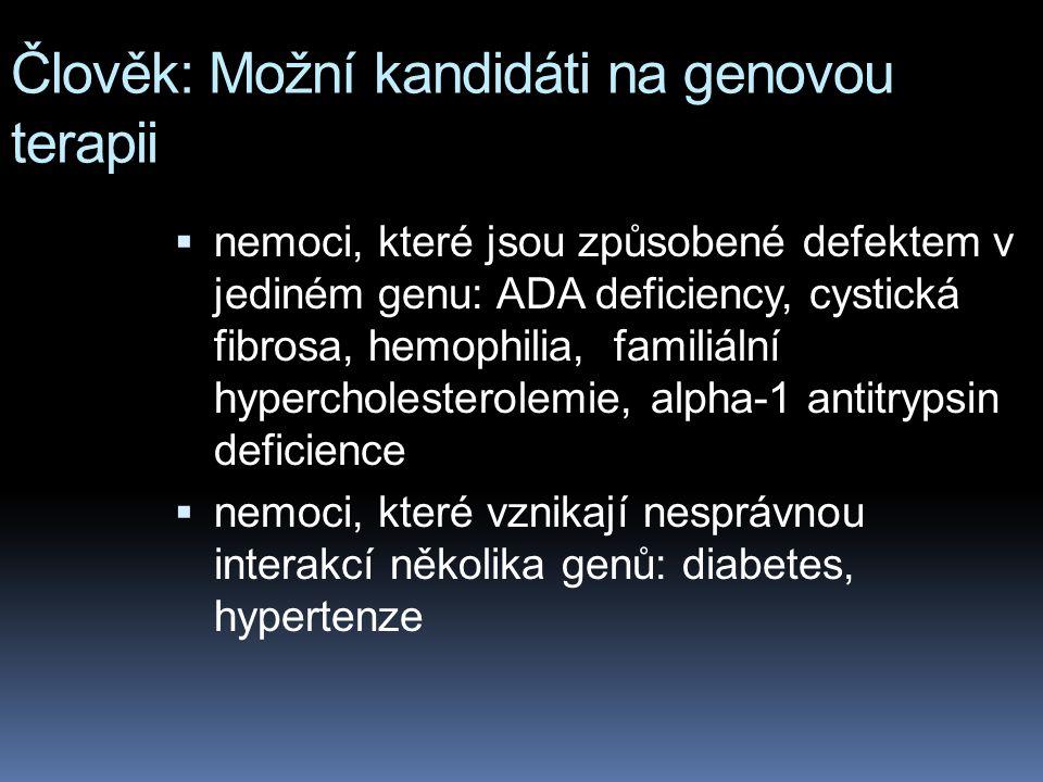 Člověk: Možní kandidáti na genovou terapii  nemoci, které jsou způsobené defektem v jediném genu: ADA deficiency, cystická fibrosa, hemophilia, famil