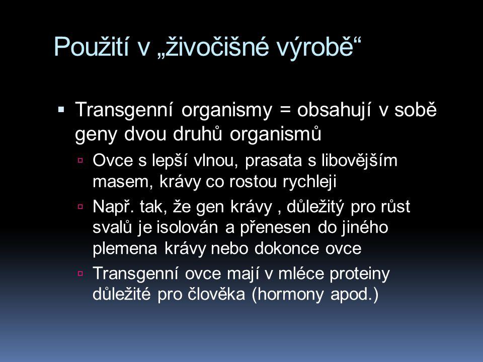 """Použití v """"živočišné výrobě""""  Transgenní organismy = obsahují v sobě geny dvou druhů organismů  Ovce s lepší vlnou, prasata s libovějším masem, kráv"""