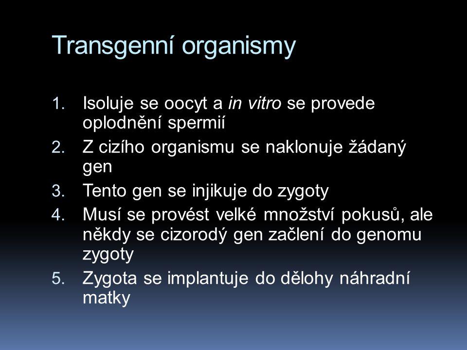 Transgenní organismy 1. Isoluje se oocyt a in vitro se provede oplodnění spermií 2. Z cizího organismu se naklonuje žádaný gen 3. Tento gen se injikuj