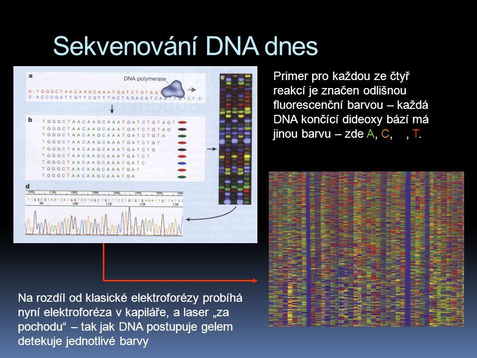 Sekvenování DNA dnes Primer pro každou ze čtyř reakcí je značen odlišnou fluorescenční barvou – každá DNA končící dideoxy bází má jinou barvu – zde A,