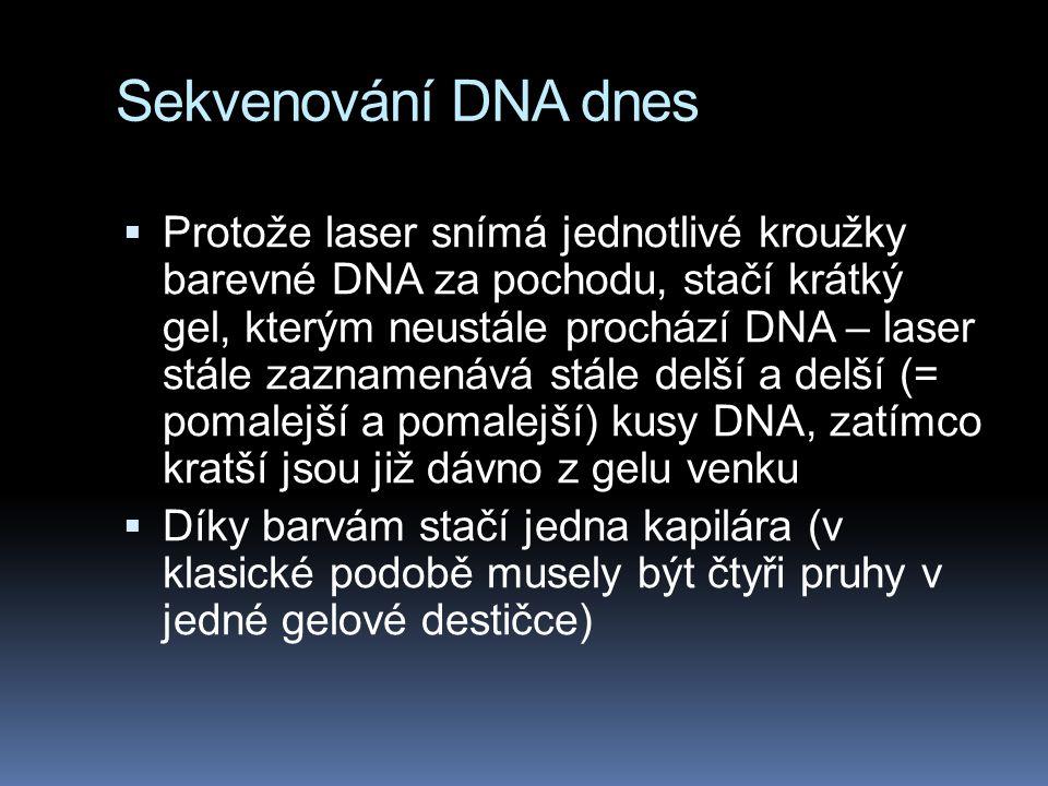 Sekvenování DNA dnes  Protože laser snímá jednotlivé kroužky barevné DNA za pochodu, stačí krátký gel, kterým neustále prochází DNA – laser stále zaz