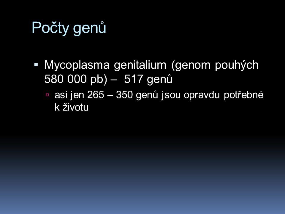 Počty genů  Mycoplasma genitalium (genom pouhých 580 000 pb) – 517 genů  asi jen 265 – 350 genů jsou opravdu potřebné k životu