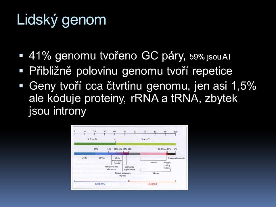  41% genomu tvořeno GC páry, 59% jsou AT  Přibližně polovinu genomu tvoří repetice  Geny tvoří cca čtvrtinu genomu, jen asi 1,5% ale kóduje protein