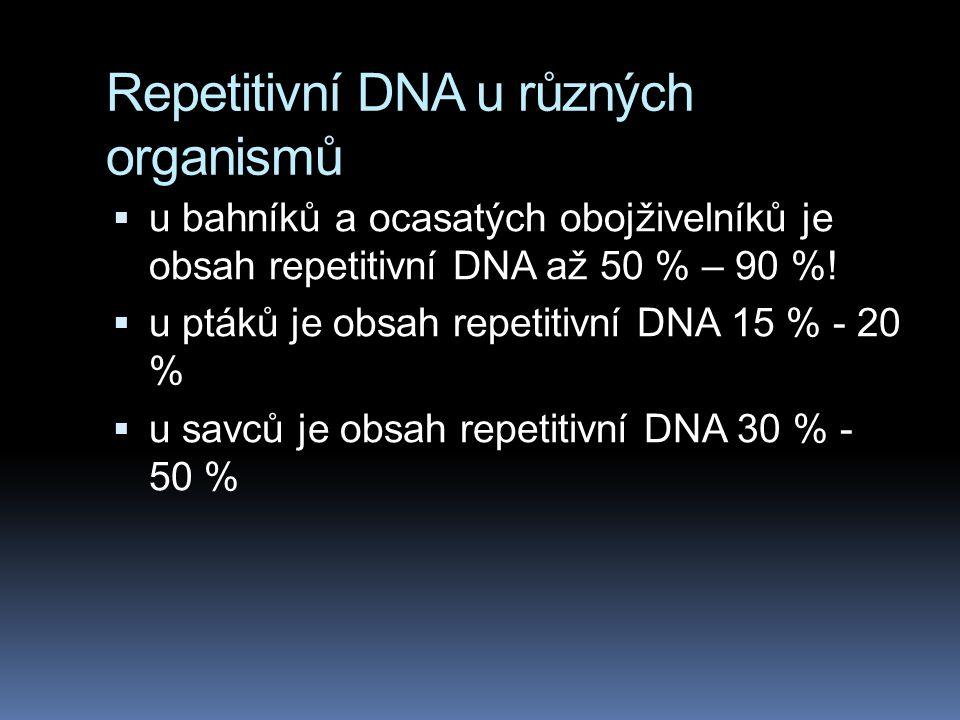 Repetitivní DNA u různých organismů  u bahníků a ocasatých obojživelníků je obsah repetitivní DNA až 50 % – 90 %!  u ptáků je obsah repetitivní DNA