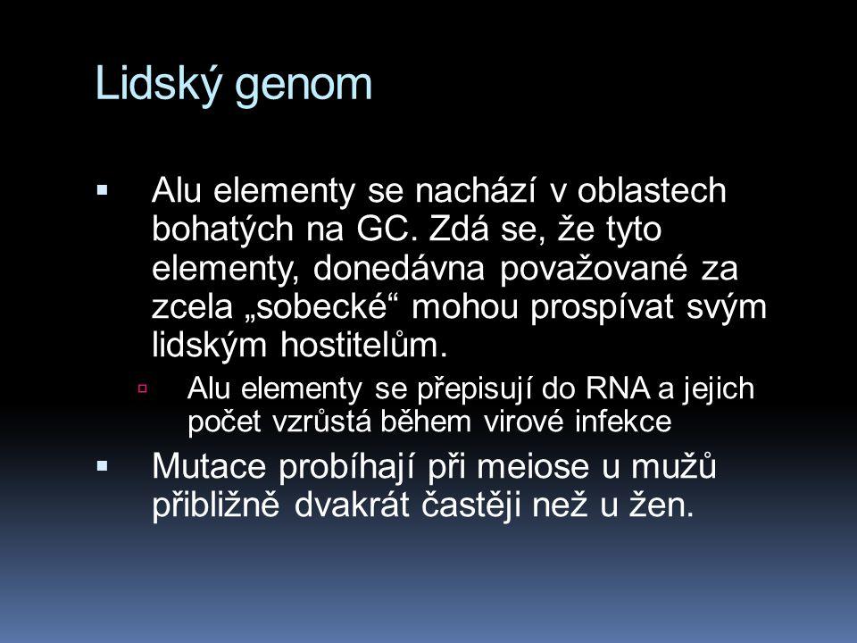 """Lidský genom  Alu elementy se nachází v oblastech bohatých na GC. Zdá se, že tyto elementy, donedávna považované za zcela """"sobecké"""" mohou prospívat s"""