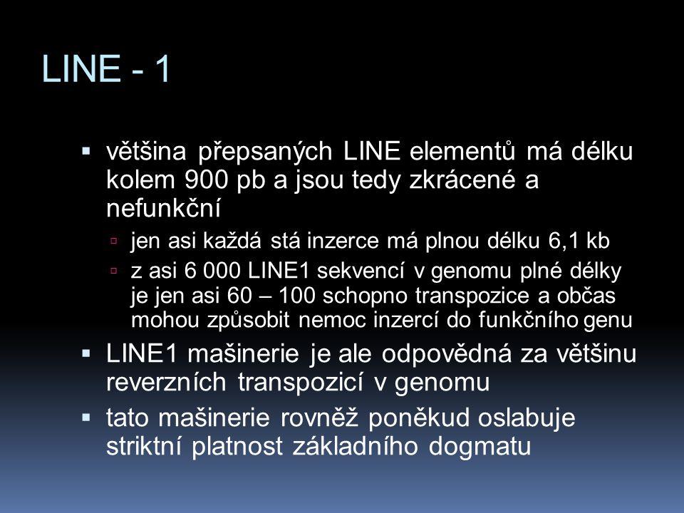 LINE - 1  většina přepsaných LINE elementů má délku kolem 900 pb a jsou tedy zkrácené a nefunkční  jen asi každá stá inzerce má plnou délku 6,1 kb 