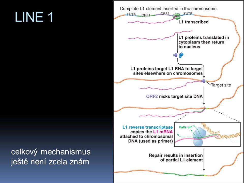 LINE 1 celkový mechanismus ještě není zcela znám