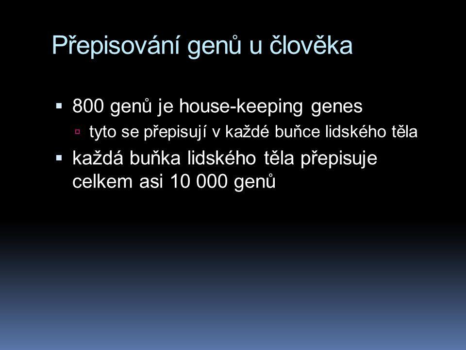 Přepisování genů u člověka  800 genů je house-keeping genes  tyto se přepisují v každé buňce lidského těla  každá buňka lidského těla přepisuje cel