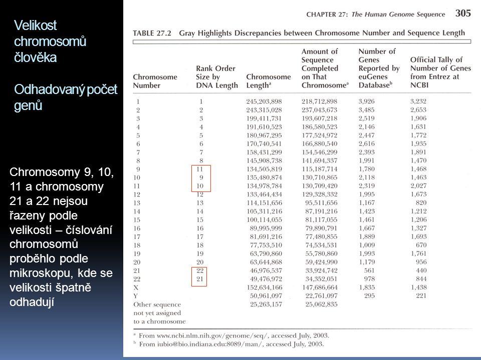 Velikost chromosomů člověka Odhadovaný počet genů Chromosomy 9, 10, 11 a chromosomy 21 a 22 nejsou řazeny podle velikosti – číslování chromosomů probě