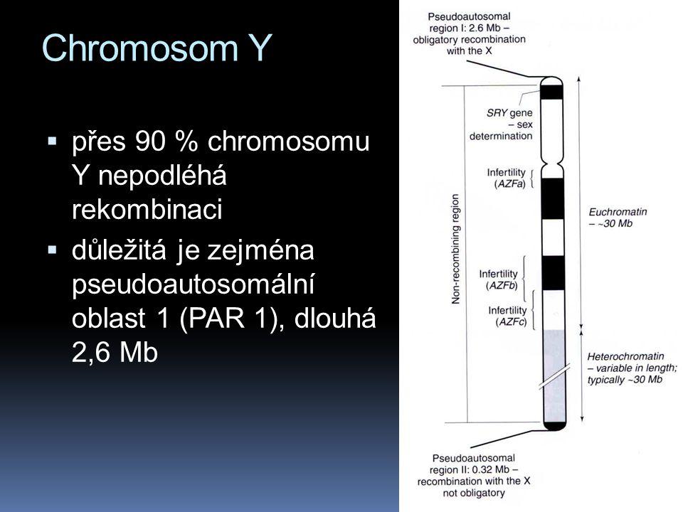 Chromosom Y  přes 90 % chromosomu Y nepodléhá rekombinaci  důležitá je zejména pseudoautosomální oblast 1 (PAR 1), dlouhá 2,6 Mb