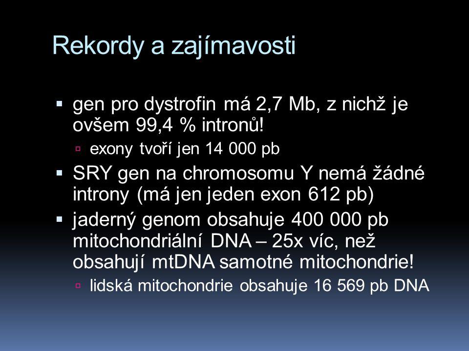 Rekordy a zajímavosti  gen pro dystrofin má 2,7 Mb, z nichž je ovšem 99,4 % intronů!  exony tvoří jen 14 000 pb  SRY gen na chromosomu Y nemá žádné