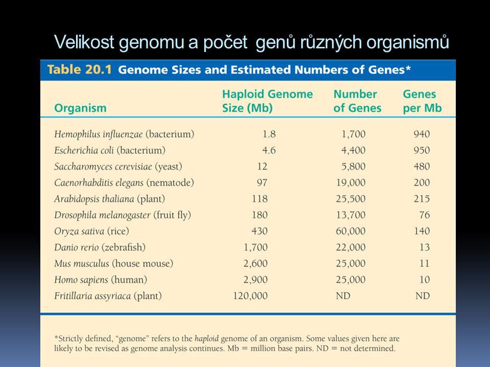 Velikost genomu a počet genů různých organismů