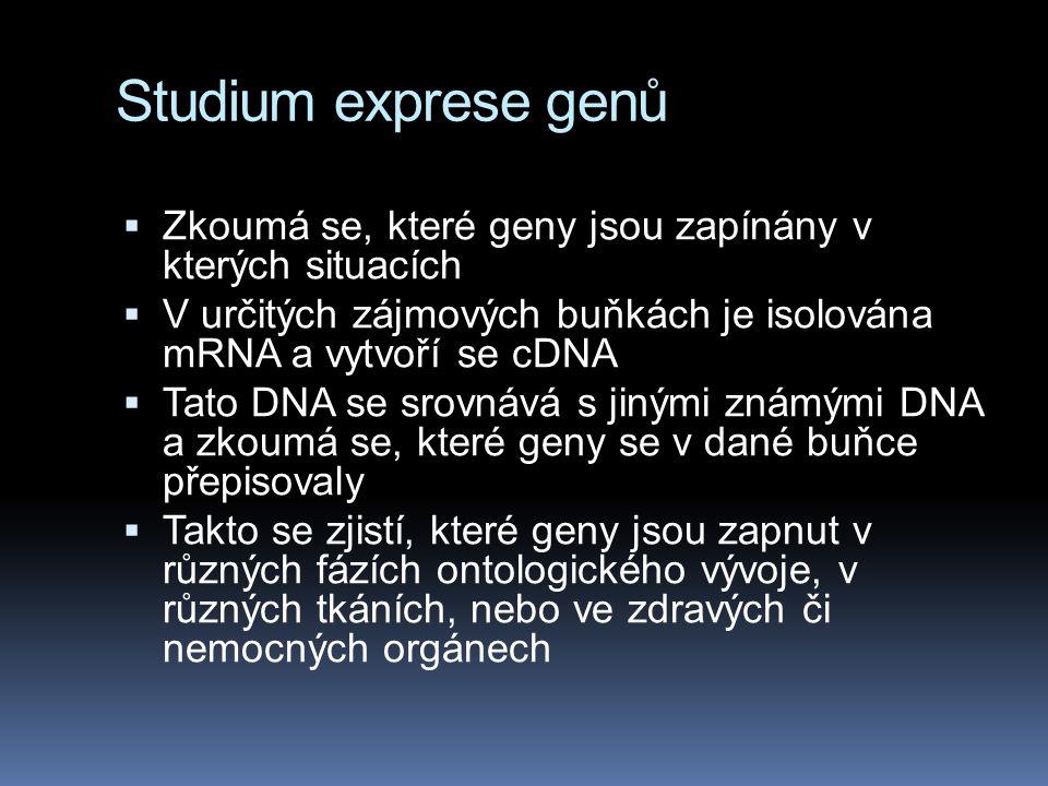 Studium exprese genů  Zkoumá se, které geny jsou zapínány v kterých situacích  V určitých zájmových buňkách je isolována mRNA a vytvoří se cDNA  Ta
