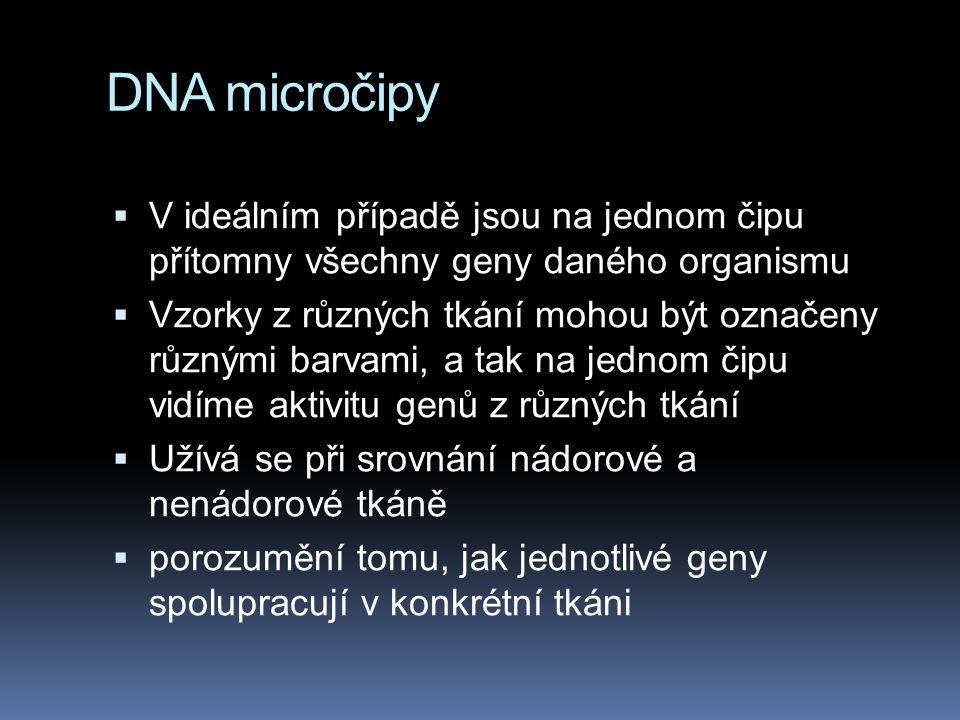 DNA micročipy  V ideálním případě jsou na jednom čipu přítomny všechny geny daného organismu  Vzorky z různých tkání mohou být označeny různými barv
