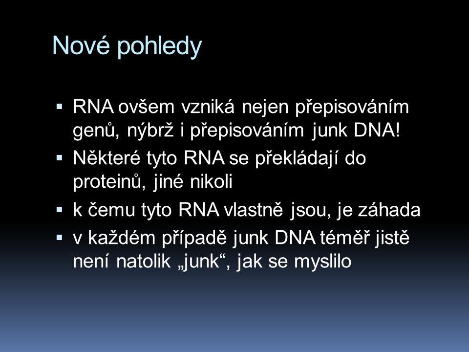 Nové pohledy  RNA ovšem vzniká nejen přepisováním genů, nýbrž i přepisováním junk DNA!  Některé tyto RNA se překládají do proteinů, jiné nikoli  k