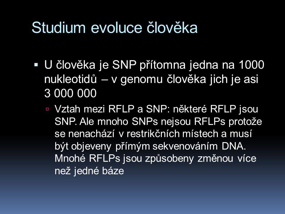 Studium evoluce člověka  U člověka je SNP přítomna jedna na 1000 nukleotidů – v genomu člověka jich je asi 3 000 000  Vztah mezi RFLP a SNP: některé