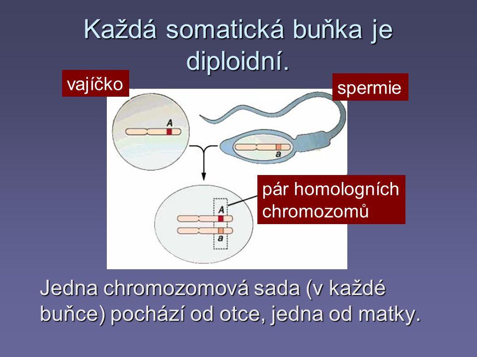 Každá somatická buňka je diploidní.