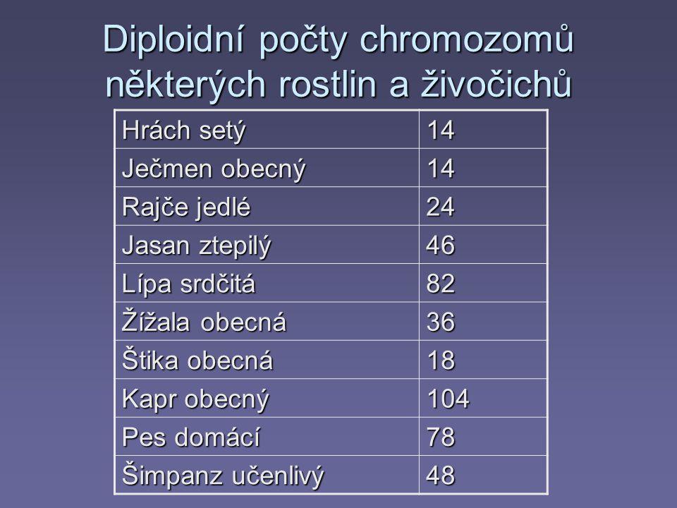 Diploidní počty chromozomů některých rostlin a živočichů Hrách setý 14 Ječmen obecný 14 Rajče jedlé 24 Jasan ztepilý 46 Lípa srdčitá 82 Žížala obecná