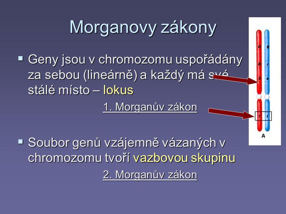 Morganovy zákony  Geny jsou v chromozomu uspořádány za sebou (lineárně) a každý má své stálé místo – lokus 1. Morganův zákon  Soubor genů vzájemně v