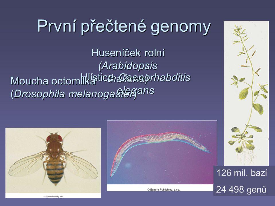 První přečtené genomy Huseníček rolní (Arabidopsis thaliana) Hlístice Caenorhabditis elegans Moucha octomilka (Drosophila melanogaster) 126 mil. bazí