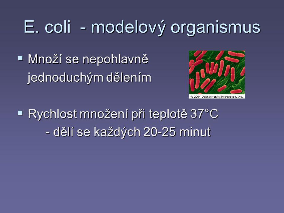 E. coli - modelový organismus  Množí se nepohlavně jednoduchým dělením  Rychlost množení při teplotě 37°C - dělí se každých 20-25 minut