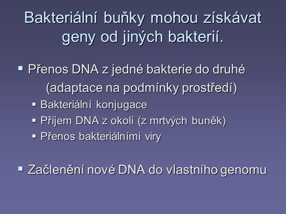 Bakteriální buňky mohou získávat geny od jiných bakterií.  Přenos DNA z jedné bakterie do druhé (adaptace na podmínky prostředí)  Bakteriální konjug
